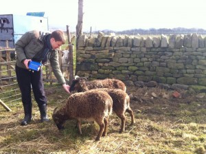 Richard feeding sheep